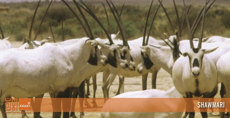 Shawmari Wildlife Reserve