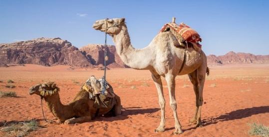 20160603-camel-1120371_1280-995974-edited