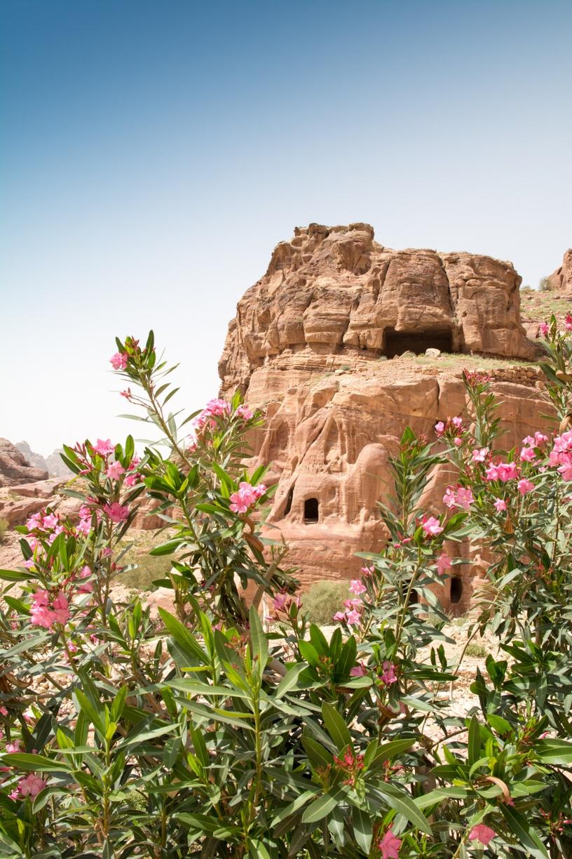 http://www.wildland.com/trips/middle-east/jordan/Jordan-Explorer/overview.aspx